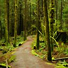 Rainy Forest on the East Canyon Trail 2 by Michael Garson