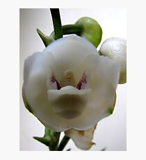 Dove Orchid Photographic Print