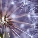 Dandelion Macro by BobbiFox