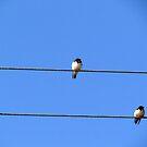 Birds sitting on wire by Shiju Sugunan