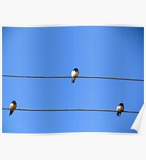 Birds sitting on wire Poster