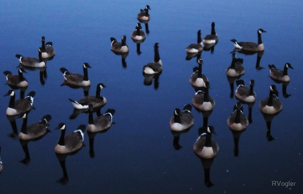 Geese Abstract by RVogler