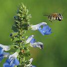 Buzzin' Blue! by KiriLees
