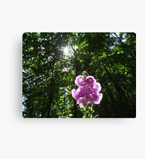 BEAUTIFUL FLOWER AT THE WATER DUNES Canvas Print
