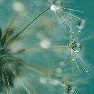 Dewdrops on Dandelion - 7 by BobbiFox