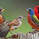 Songbird Summit by Bonnie T.  Barry