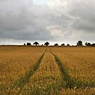Country Field by Nick Jermy