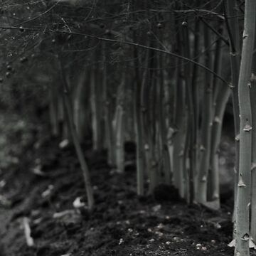 asparagus woods by Nagel
