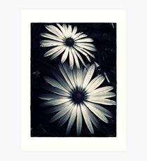 Chrome Daisies Art Print