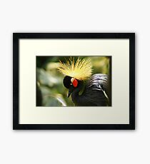 Up Close With A Royalty Framed Print