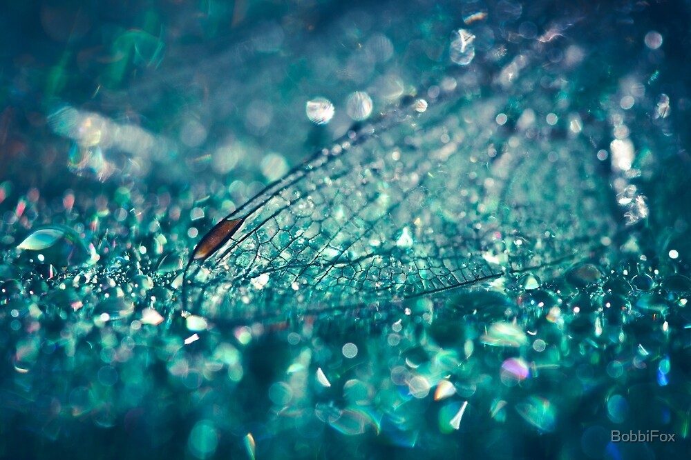Dewdrops and Dragonfly Wings by BobbiFox