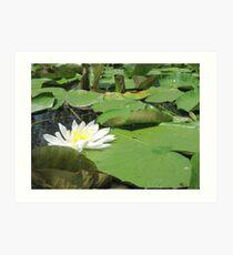 Green Lillies Art Print