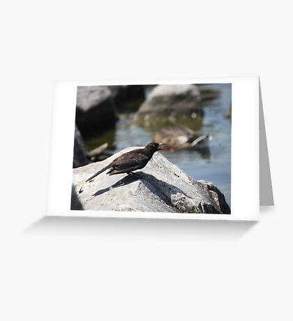 Posing Shore Bird Greeting Card