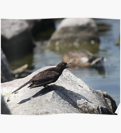 Posing Shore Bird Poster