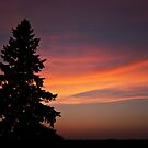 Lonesome Pine by Greg Belfrage