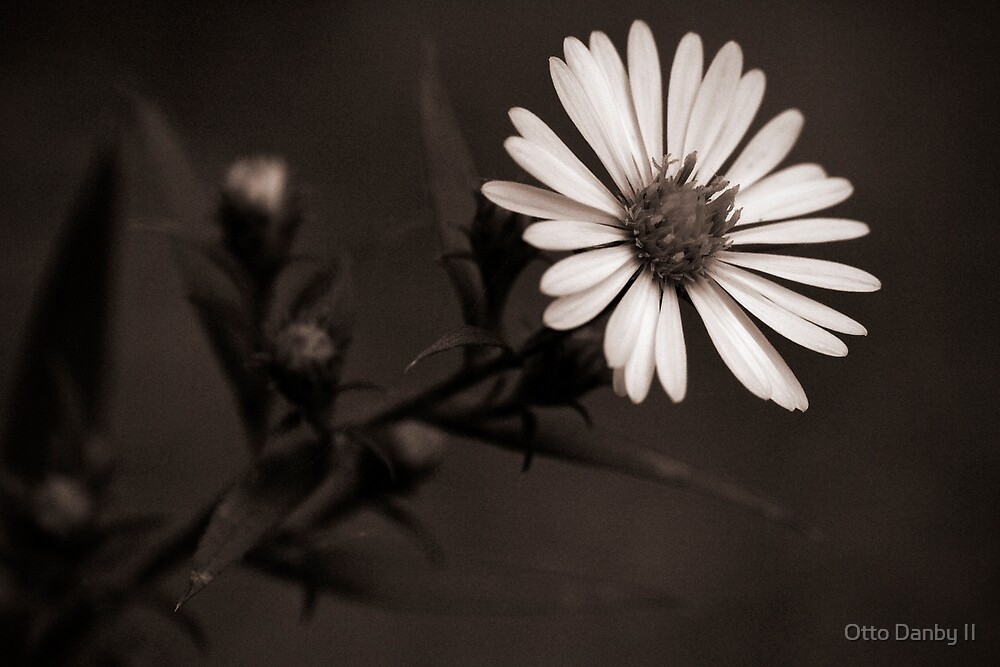Late Bloom by Otto Danby II