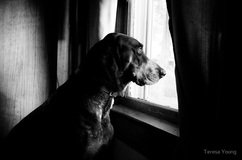 Waiting For The Mailman? by Teresa Young