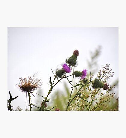 Wild Weeds Photographic Print