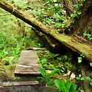 The Trail at Botanical Beach by Michael Garson