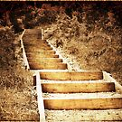 Busby Head Track - Sepia by Lynne Haselden