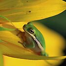 Sunflower Visitor by Maurie Alderson