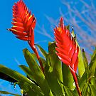 Bromeliad in flower. by johnrf