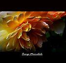 Orange Marmalade by Elaine Manley
