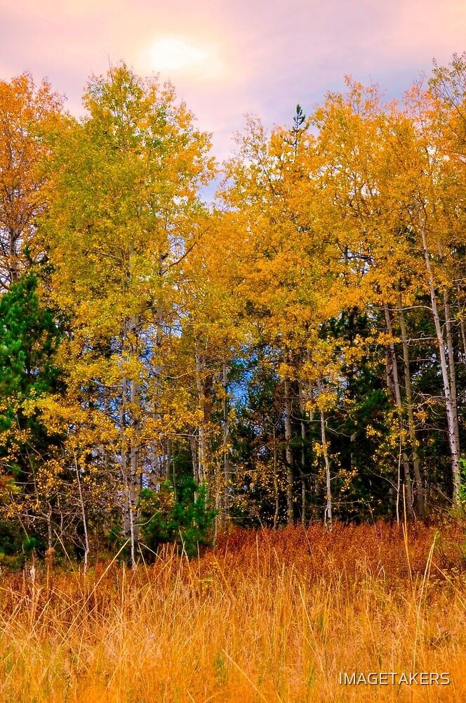 Ashton Idaho - Season Of Color (d) by IMAGETAKERS
