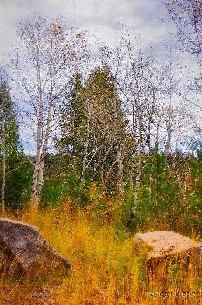 Ashton Idaho - Season Of Color (f) by IMAGETAKERS