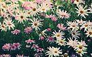 A Daisy a Day by Lynda Heins