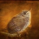 So this is what I was so anxious to see? (baby wren) by vigor