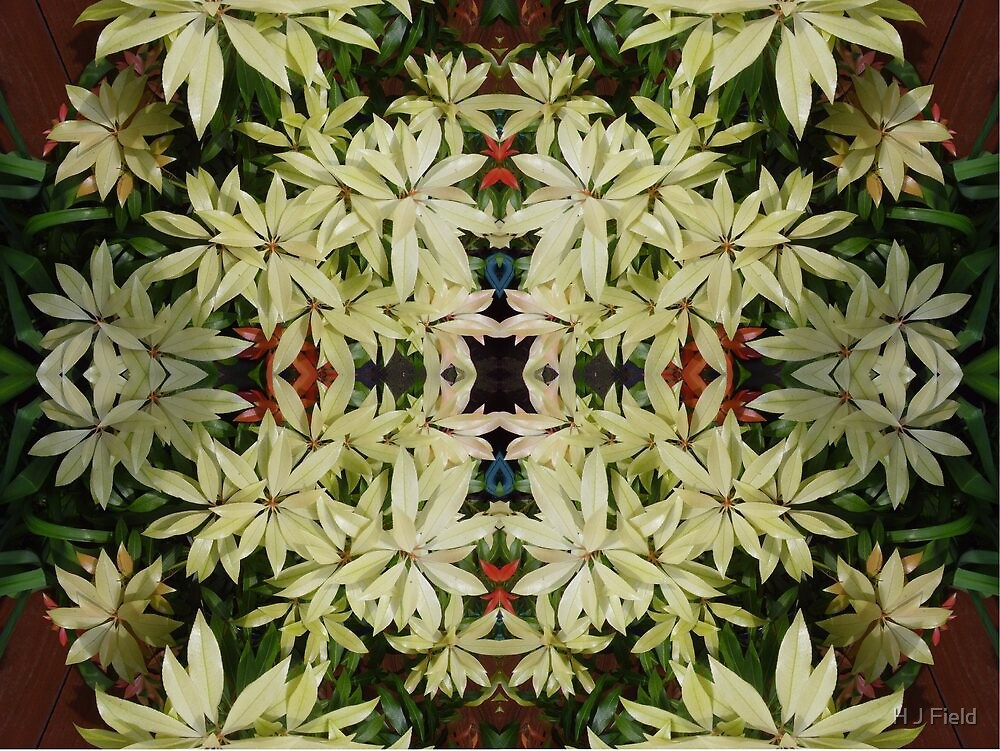 flower collage by H J Field