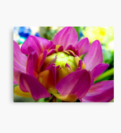 Dahlia In Bloom  Canvas Print