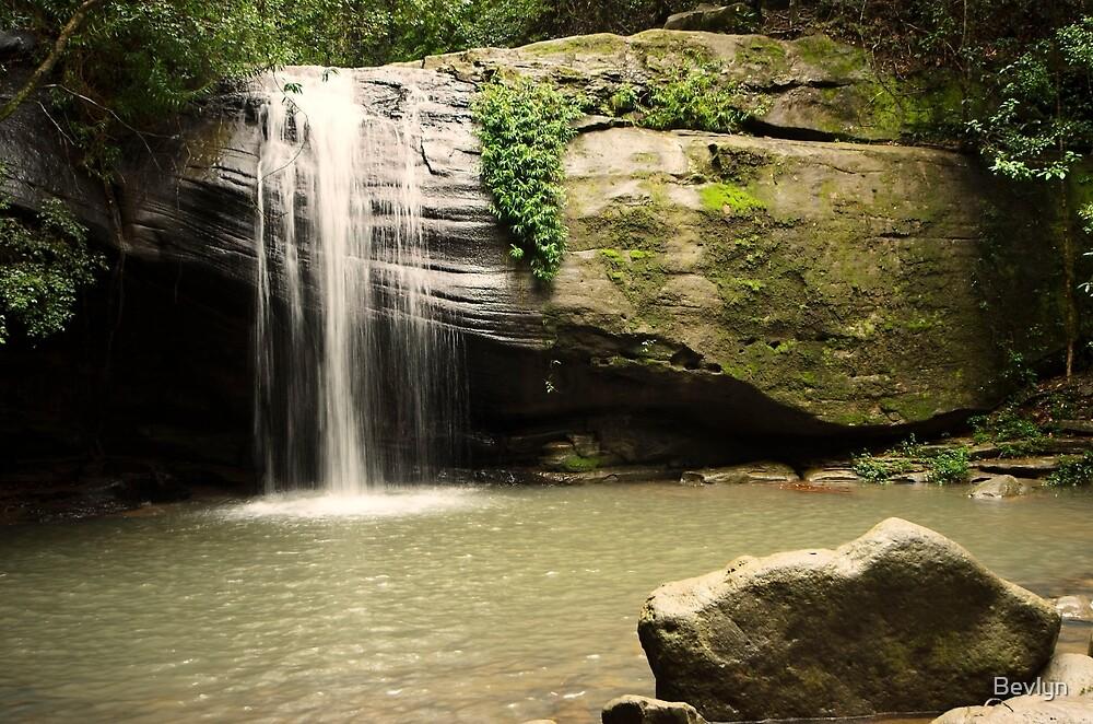 Waterfalls at Buderim by Bevlyn