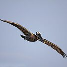 Pelican Morning Glow by Deborah  Benoit