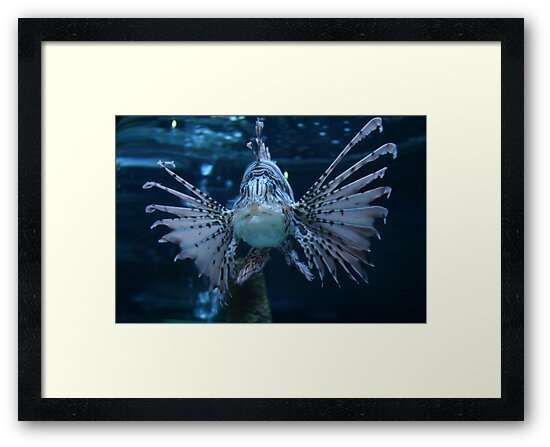 lionfish by Hope A. Burger