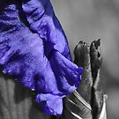 Iris in Selective Colour by MissyD