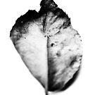 Leaf by Richard Owen