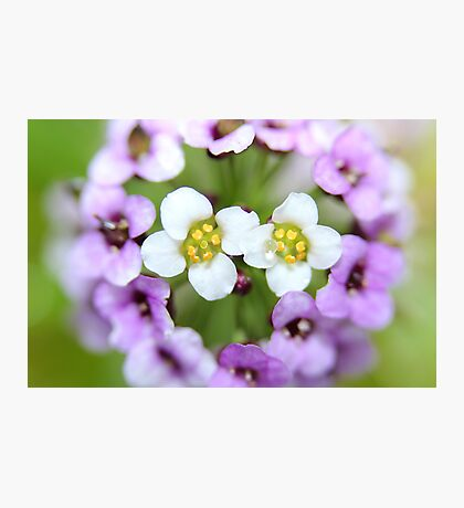 Beautiful Blur Photographic Print