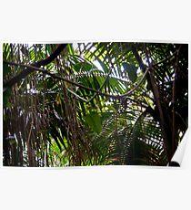 Rain Forestation Poster