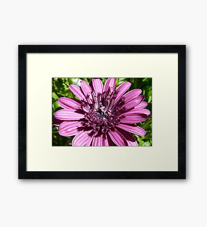 Macro of a Flower Framed Print