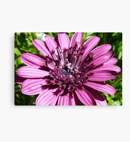 Macro of a Flower Canvas Print