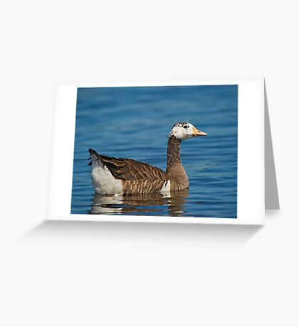 Not just another Goose Greeting Card