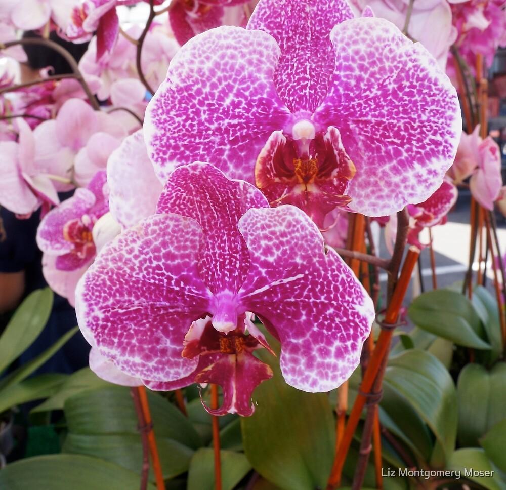 Orchids in Magenta by Liz Montgomery Moser