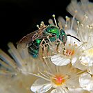 Green Bee - Macro by Debbie Pinard
