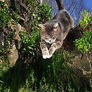 Jumping cat by turniptowers