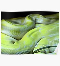 Constrictor Poster