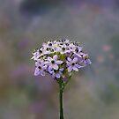 Bouquet by Judi Taylor