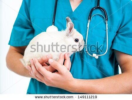 rabbitandguineapigcare by kathyaoldham