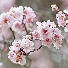 Elegant Blossom by Cathy Middleton